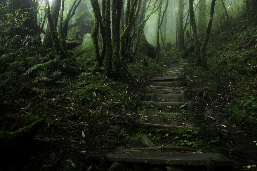 bellos-bosques-9