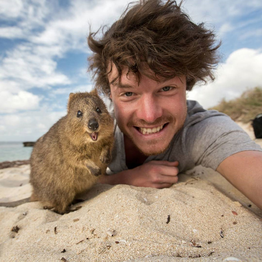 funny-animal-selfies-allan-dixon-13