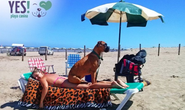 playa perro