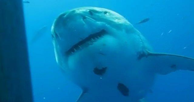 tiburon_mas_grande
