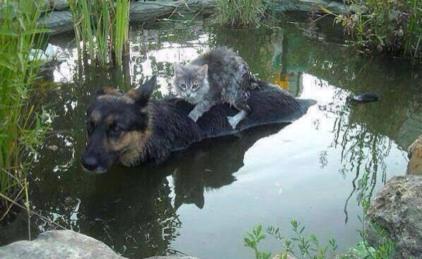 viral foto perro gato inundacion