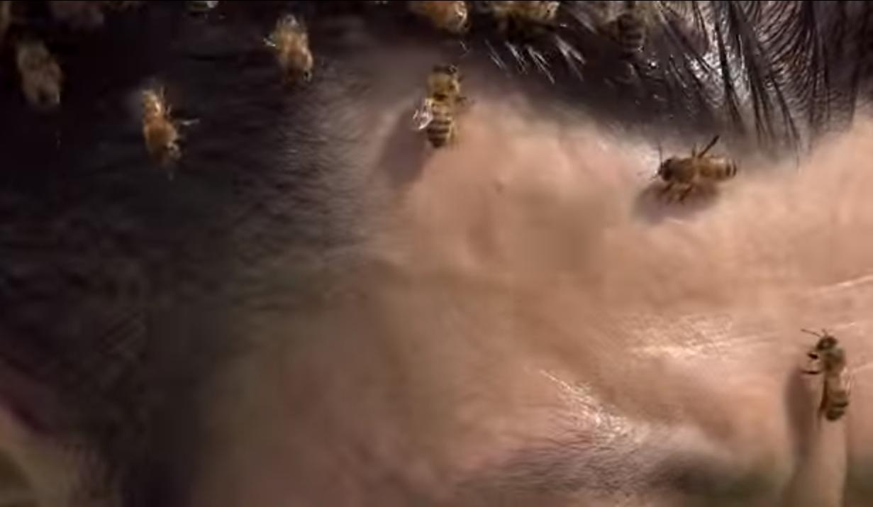 abejas en cara
