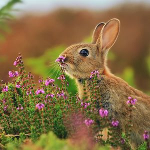 animals-smelling-flowers-101__300