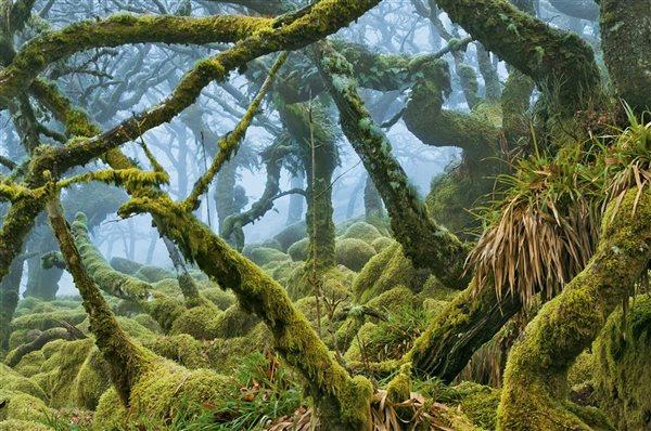 Bosque de Wistman 1