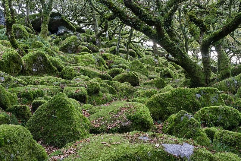 Bosque de Wistman 2