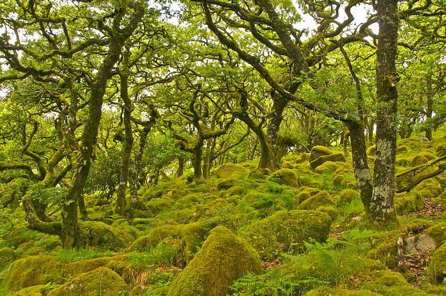 Bosque de Wistman 4