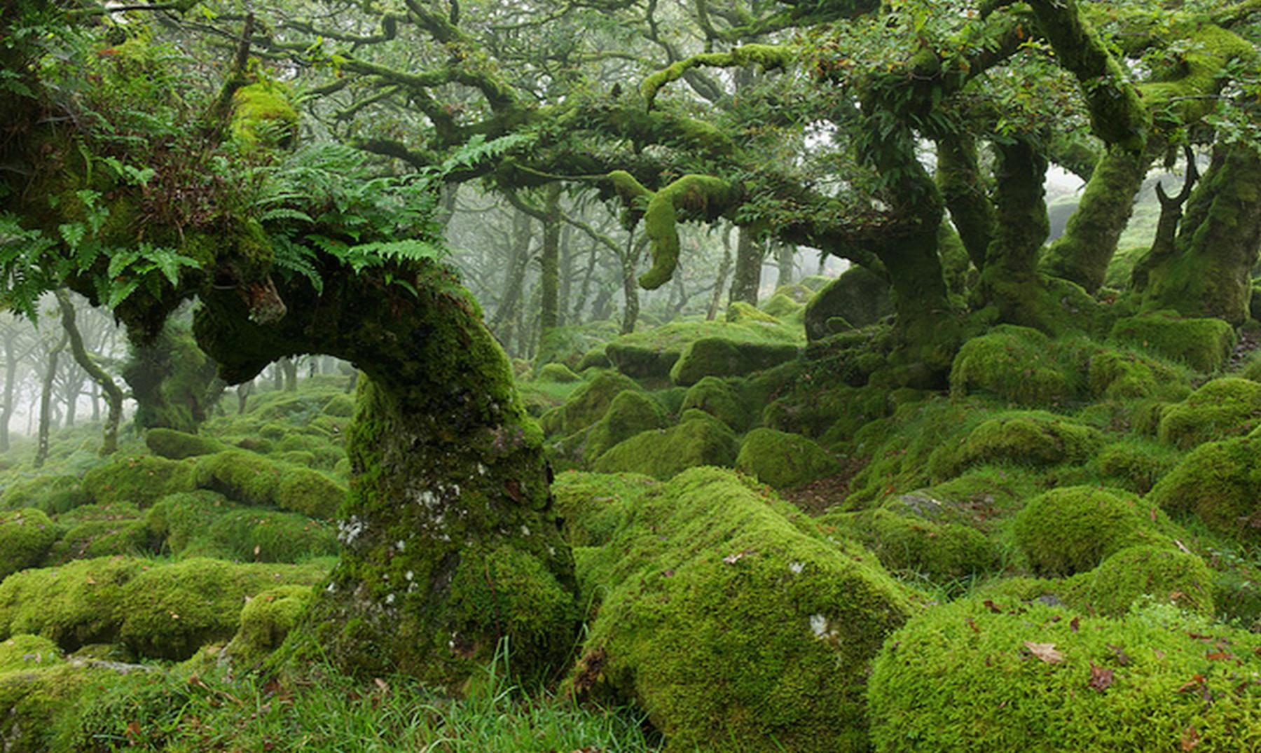 Bosque de Wistman 5