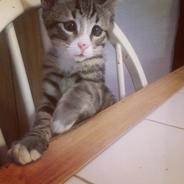 bum-cat-worried-eyes-10