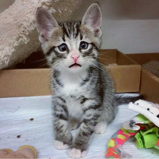 bum-cat-worried-eyes-26