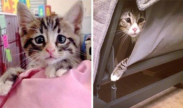 bum-cat-worried-eyes-37