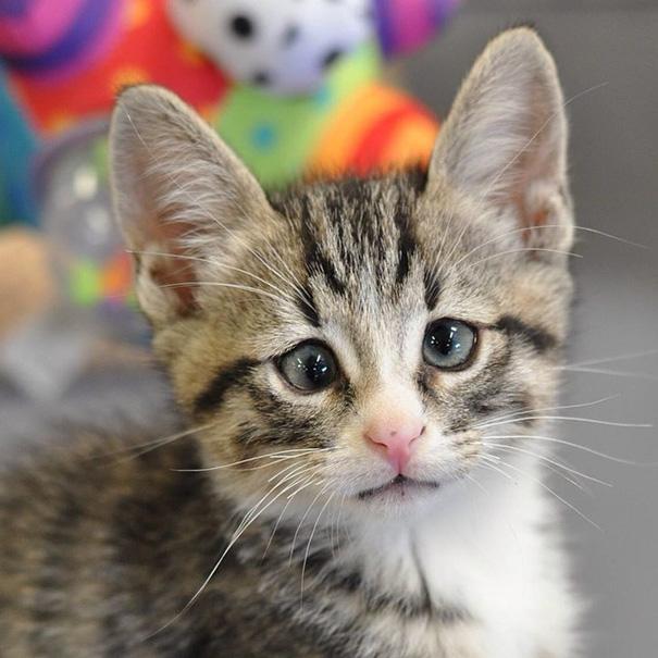 bum-cat-worried-eyes-4