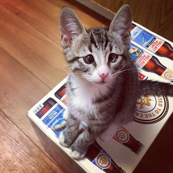 bum-cat-worried-eyes-9