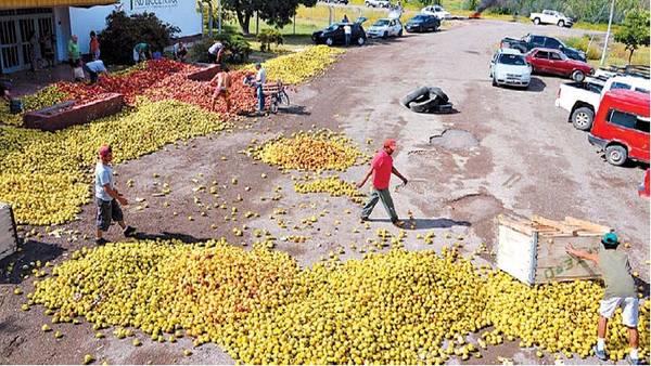 Fruta tirada