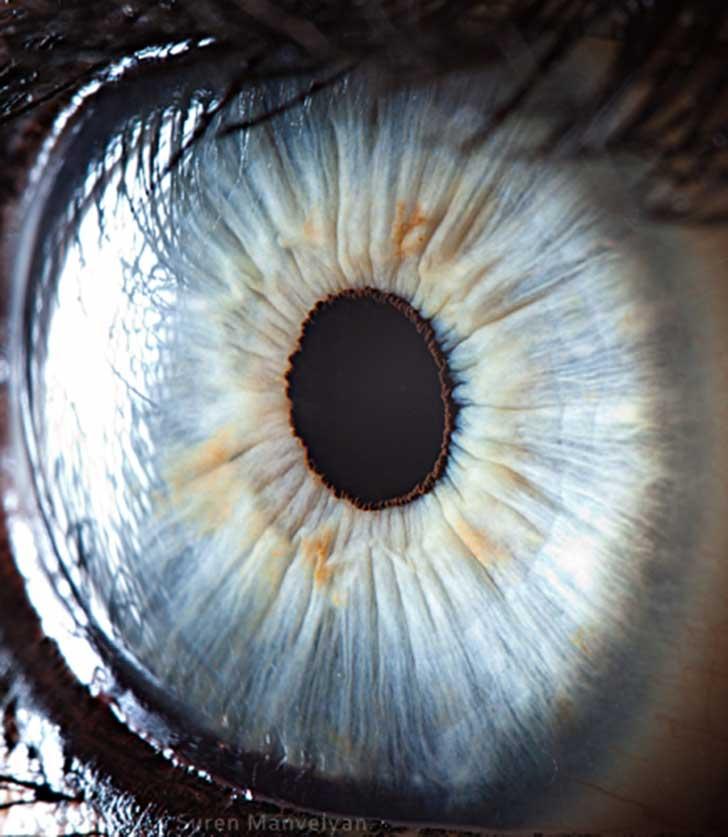 ojos (3)