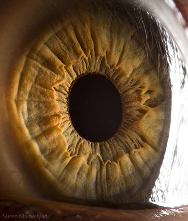 ojos (4)
