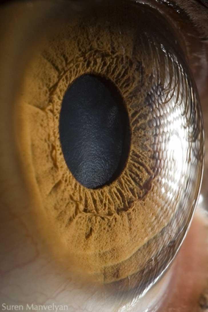 ojos (8)