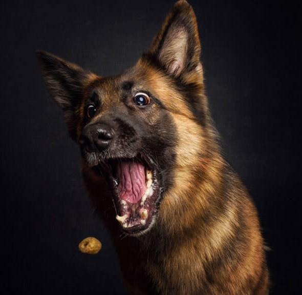 perros comiendo6