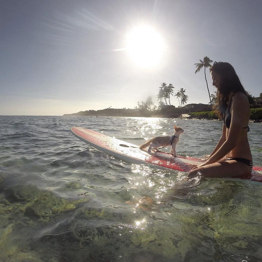 surfing-cat-likes-water-swimming-kuli-hawaii-14