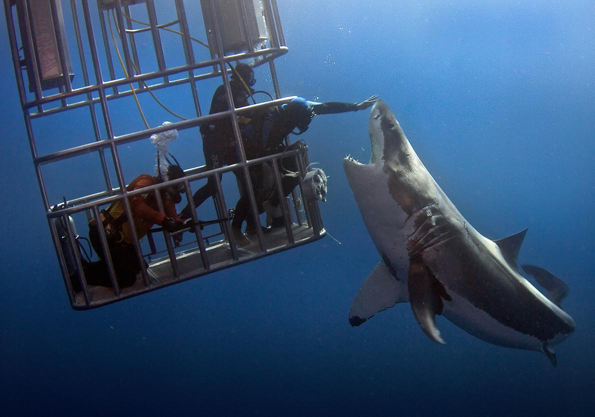 tiburon hombre