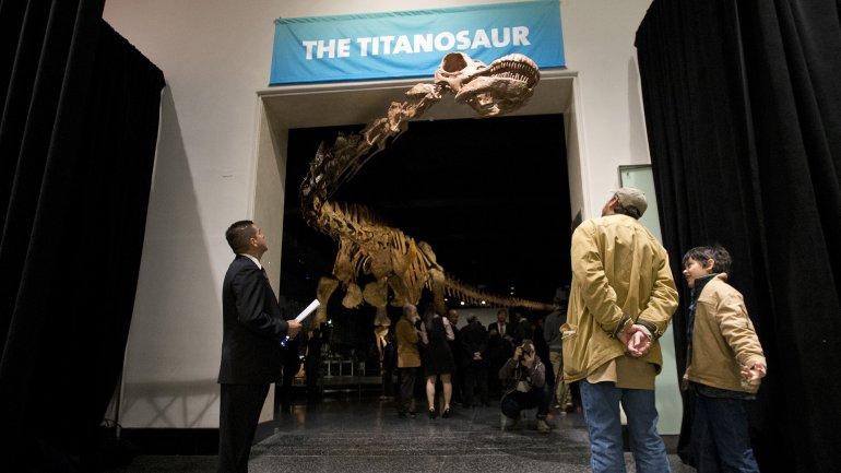 El dinosaurio se encuentra en el Museo de historia natural de Nueva York