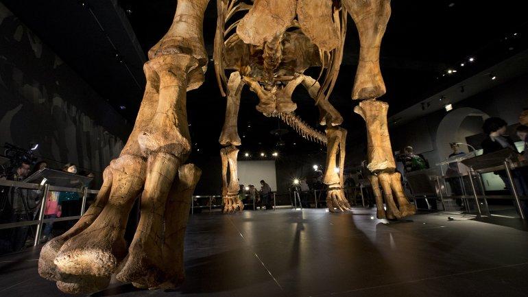 Mide 40 metros de largo, es el mas grande que se ha encontrado en el mundo