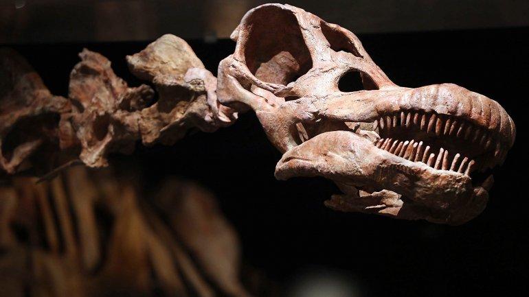 El dinosaurio es mas grande que la ballena azul, un clásico del museo de ciencias naturales