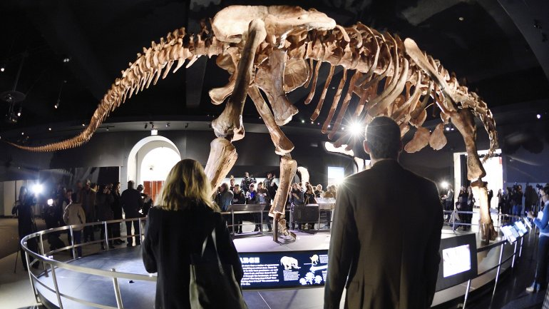 El Titanosaurio fue encontrado en la Patagonia en 2013