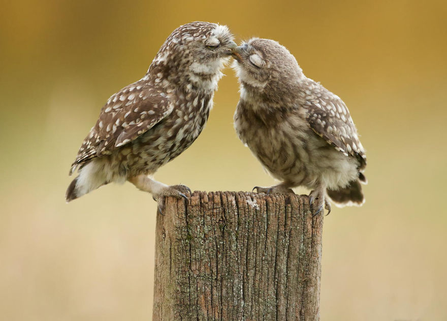 cute-animals-kissing-valentines-day-12__880
