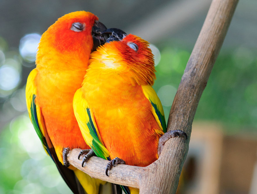cute-animals-kissing-valentines-day-18__880