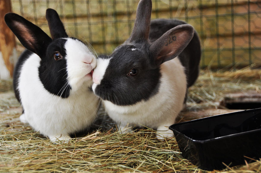 cute-animals-kissing-valentines-day-21__880