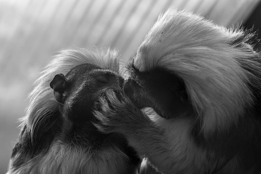 cute-animals-kissing-valentines-day-32__880