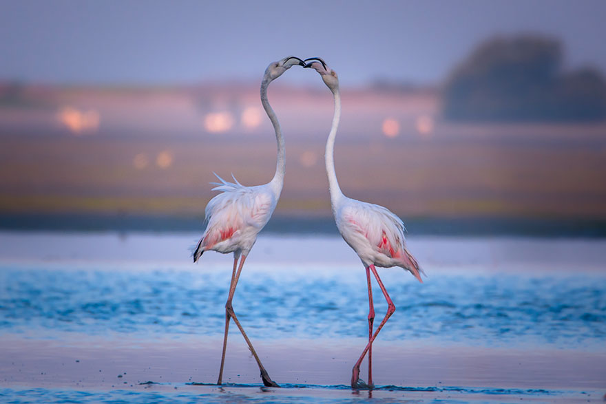 cute-animals-kissing-valentines-day-35__880