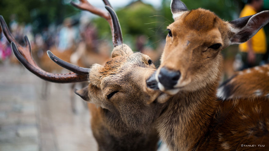 cute-animals-kissing-valentines-day-7__880