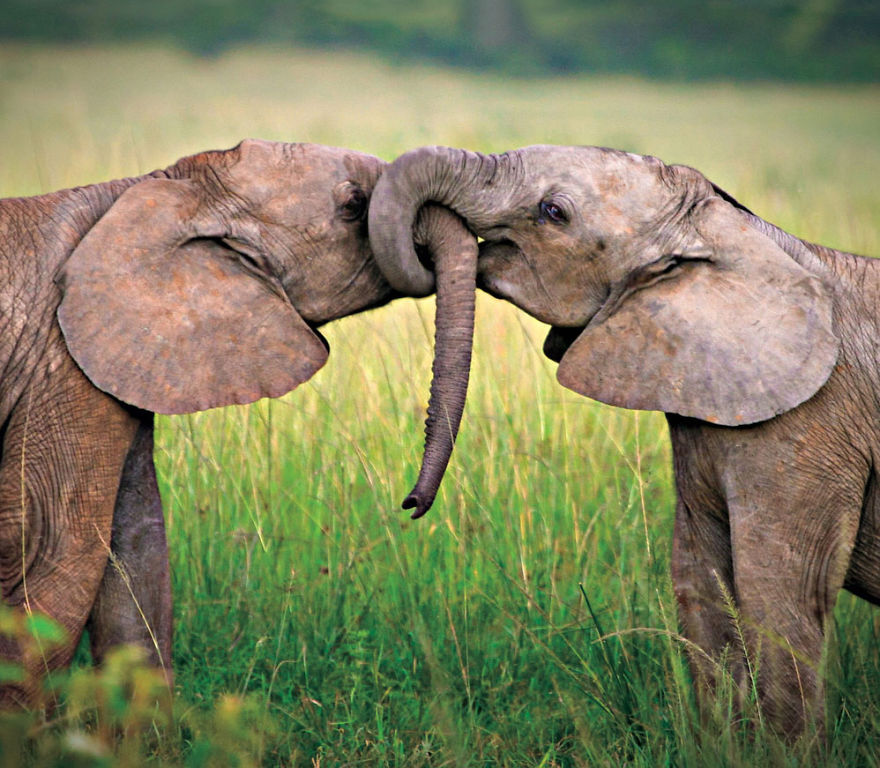 cute-animals-kissing-valentines-day-8__880