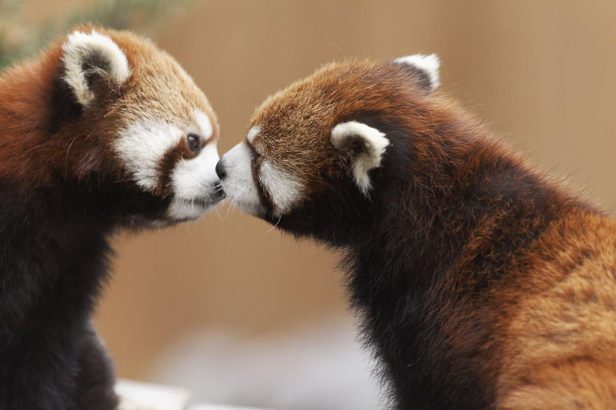 cute-animals-kissing-valentines-day-9__880
