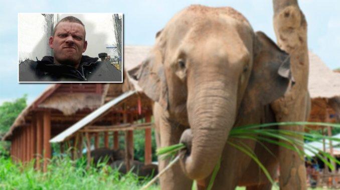 elefante mata turista