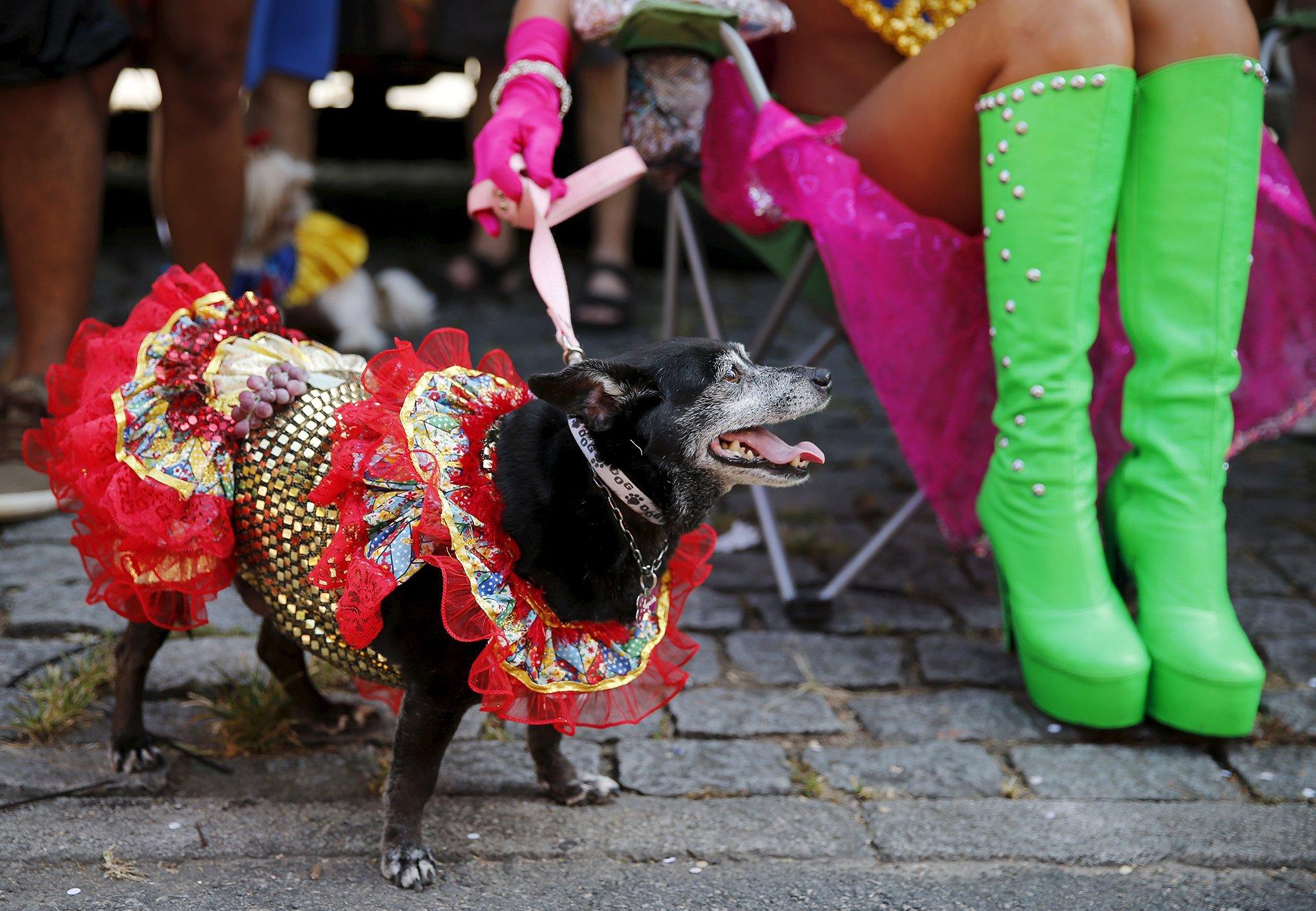 Perro Carnaval 3