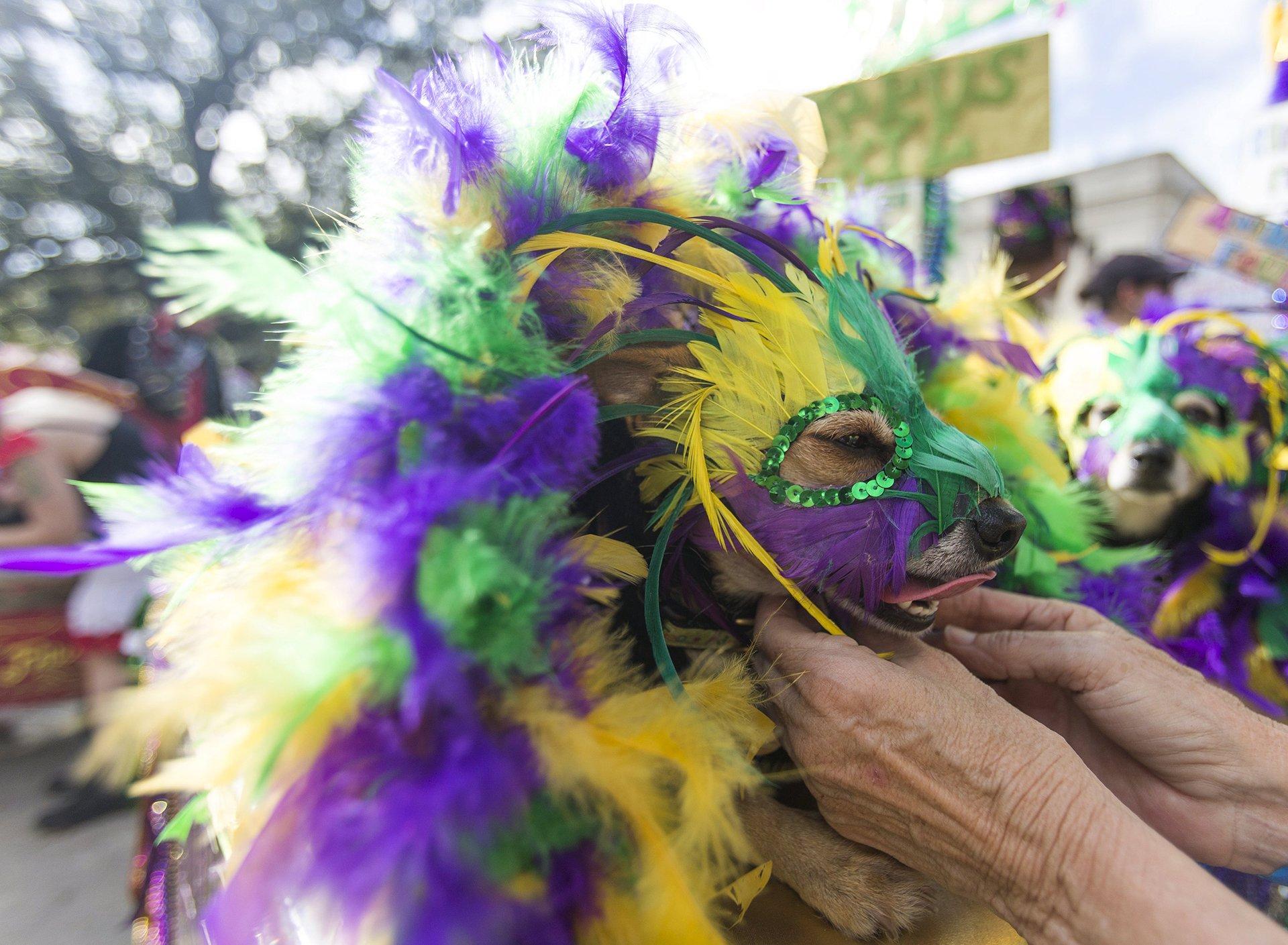Perro Carnaval 4