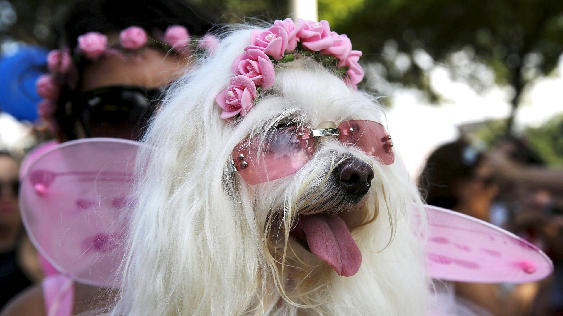 Perro Carnaval 5