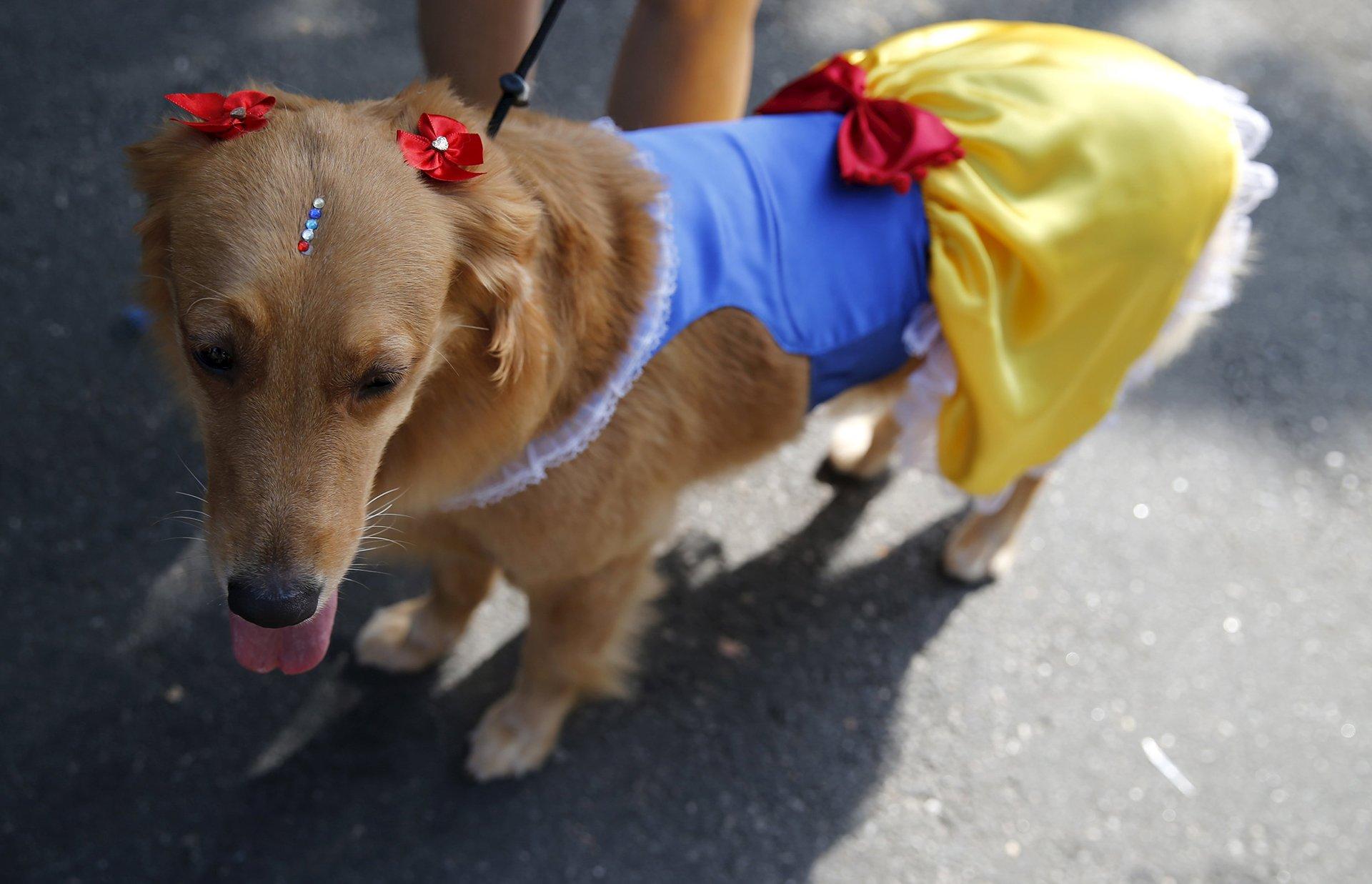 Perro Carnaval 6