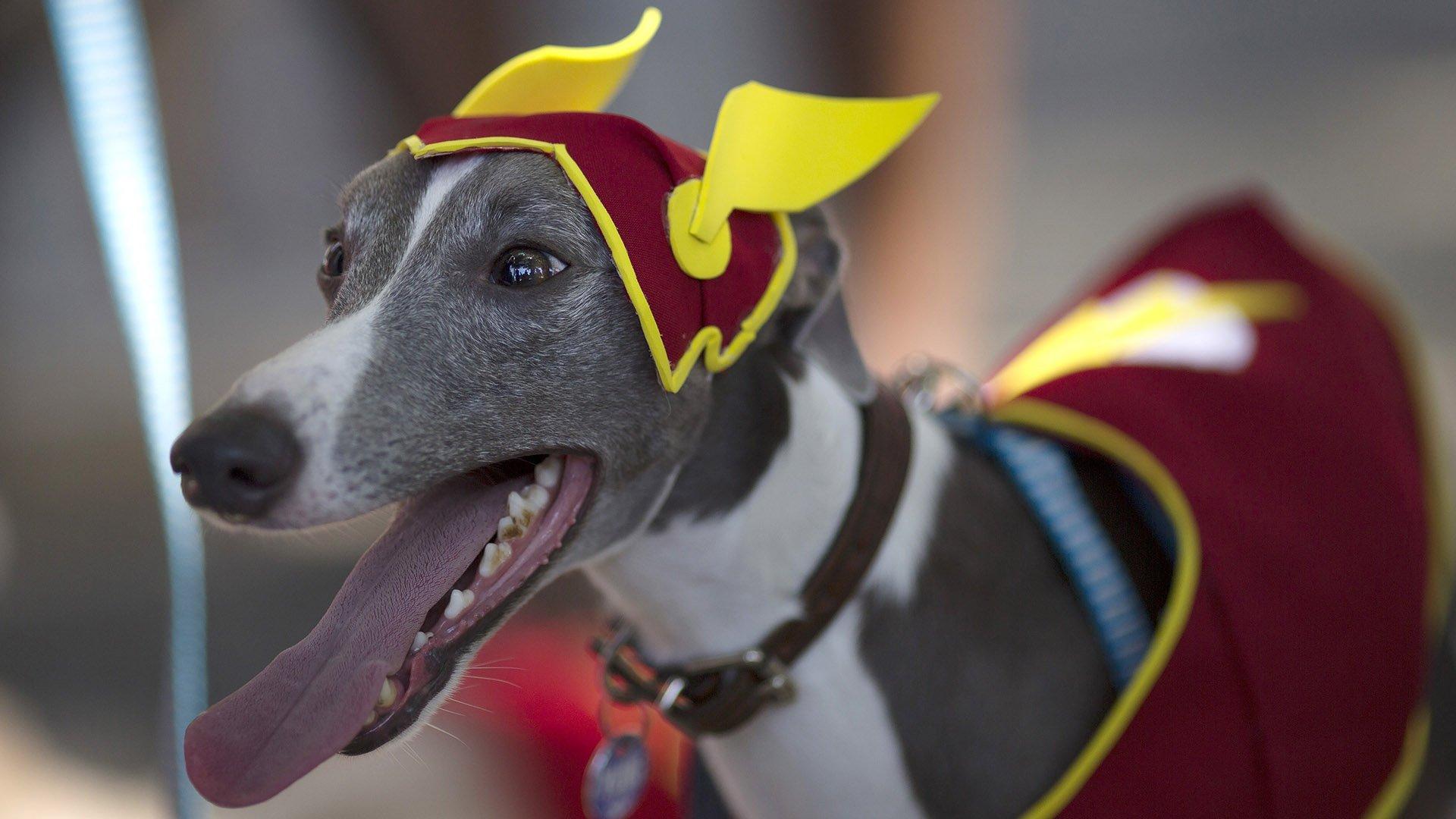 Perro Carnaval 8