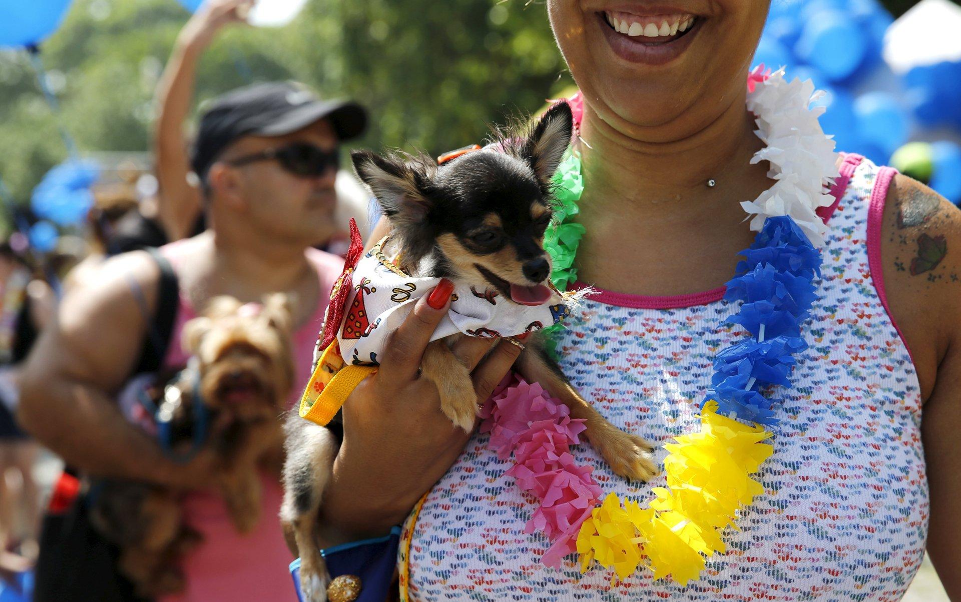 Perro Carnaval 9