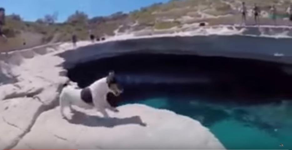 perro clavadista
