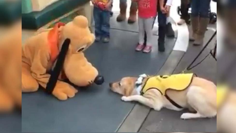 perro-pluto