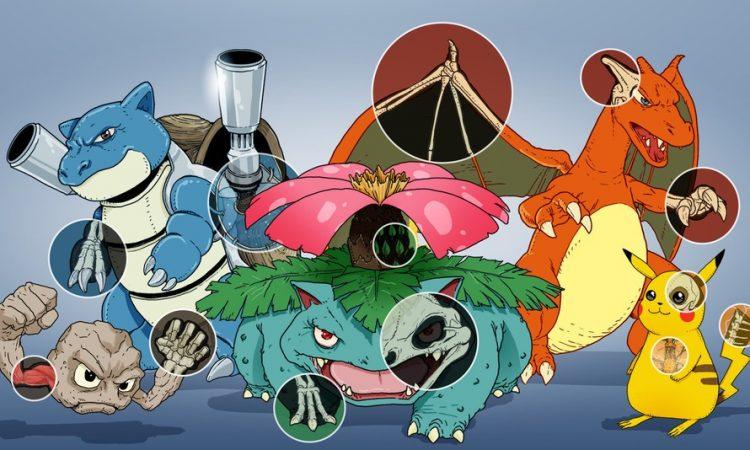 A 20 años de su creación, descifran la anatomía de los Pokemon | Nexofin