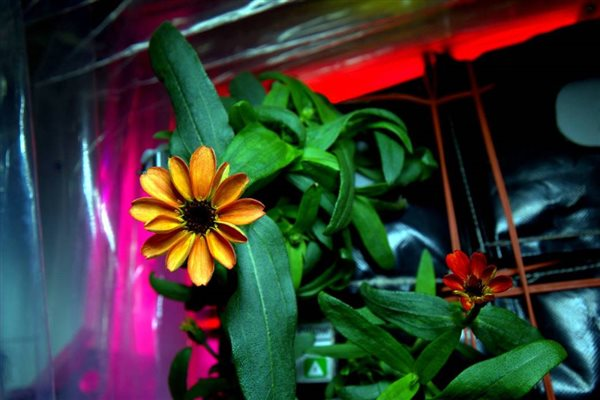 primera flor