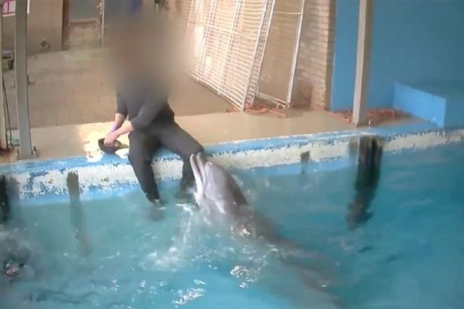 delfin holanda