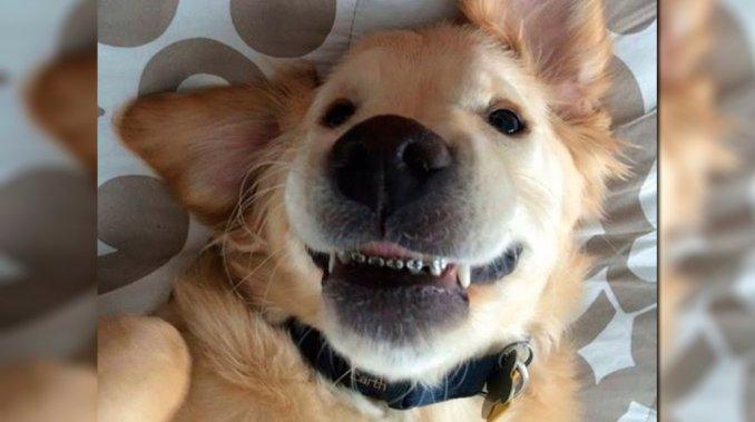 ortodoncia perro1