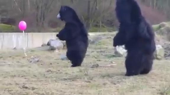 oso globo