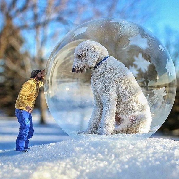 Perro Gigante 4